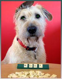Scrabble dog1