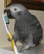 KizzyToothbrush