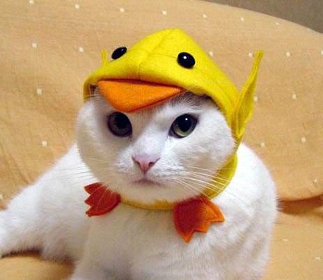 Cat_duck_hat